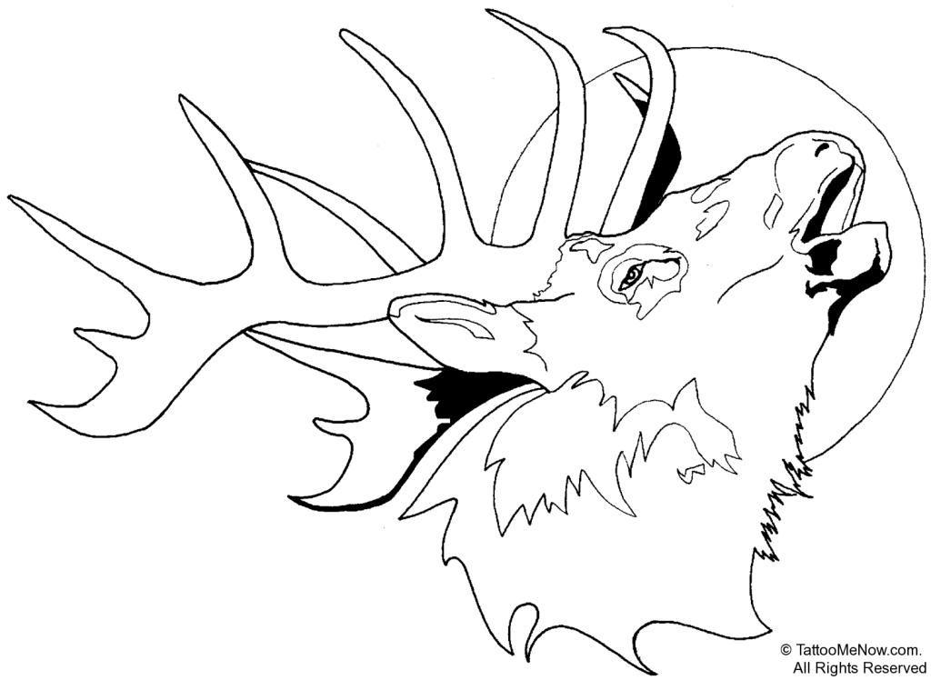 Tule Elk Deer Coloring Page From Elk Category Description From Pinterest Com I