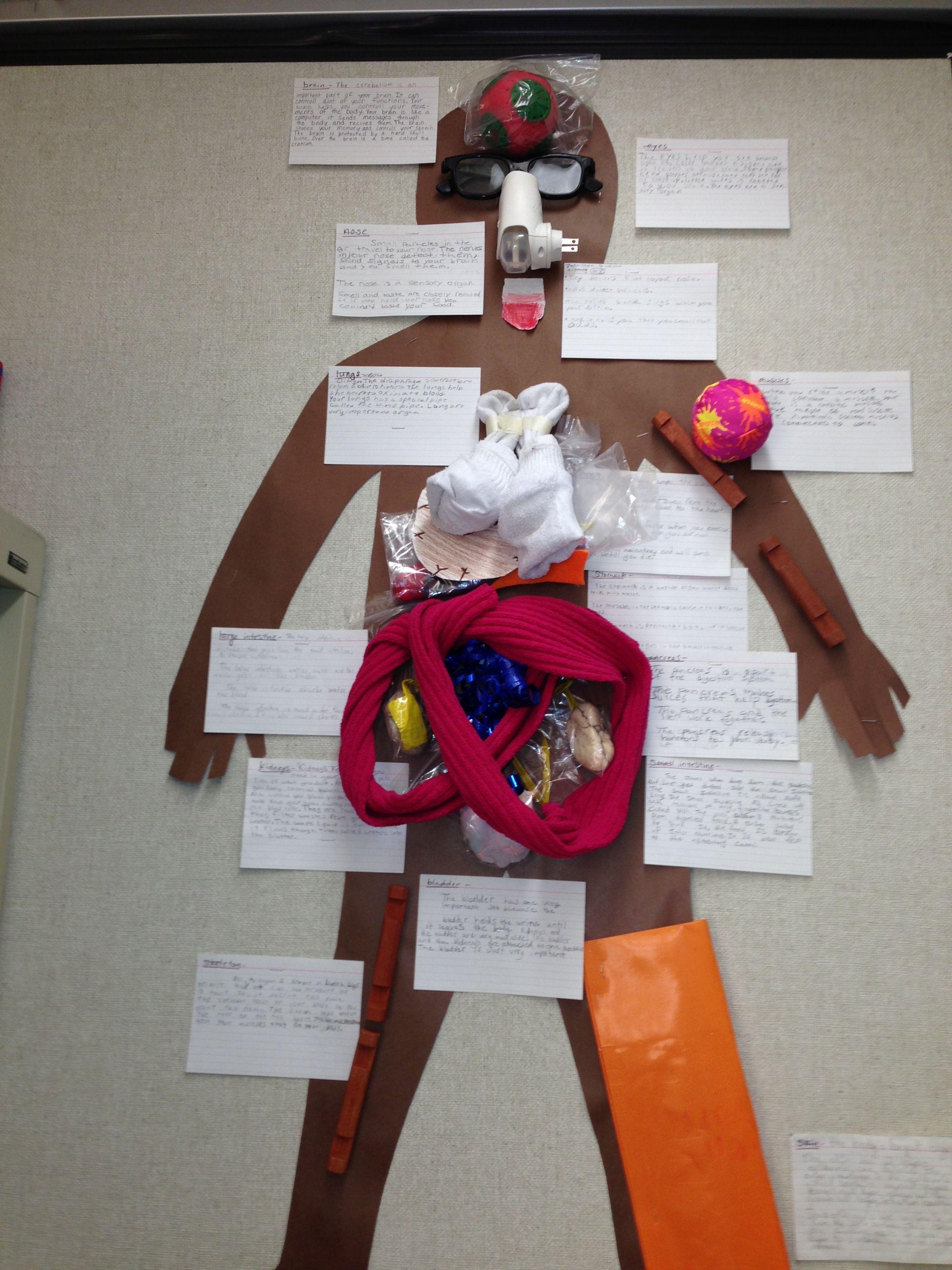 Human Body Model Organs 5th Grade
