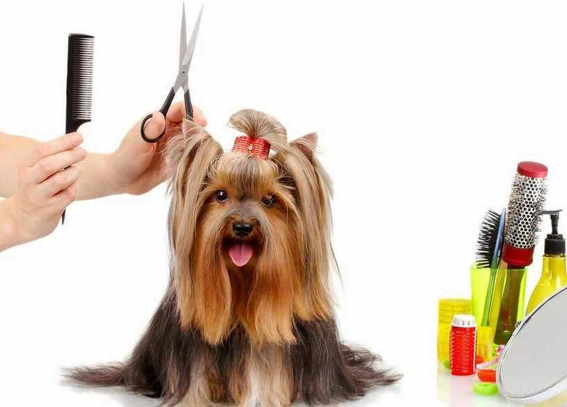 Dog Grooming Classes Near Me Dog Grooming Pinterest Dog