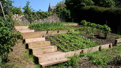 terraced vegetable garden design - Vegetable Garden Design