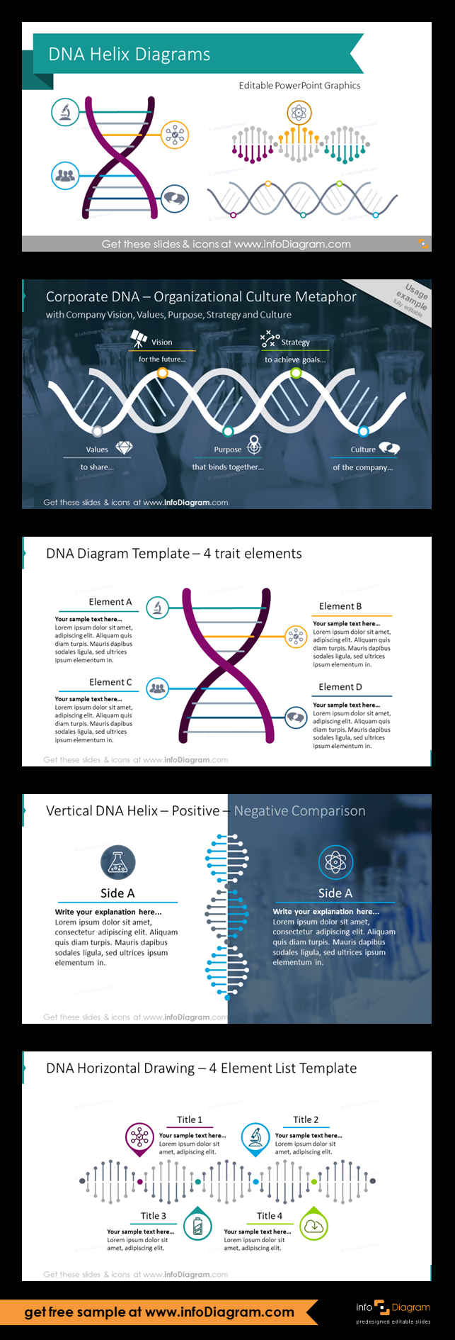 company dna helix diagrams ppt template creative ppt shapes