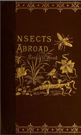 Insects Abroad... Rev. J.G. Wood