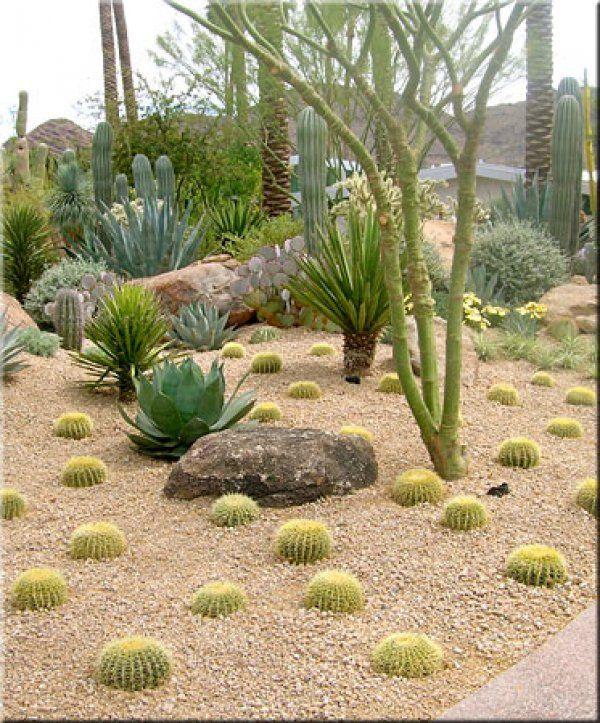 Charmant Desert Garden Design