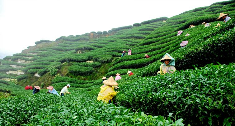 70f2d3602bb0696728356b4627406135 - Things To Do In Tea Gardens