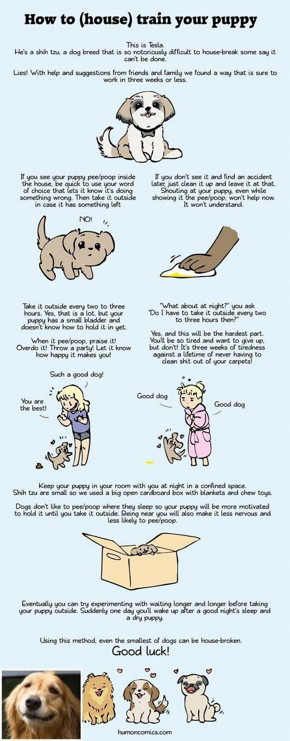 Stop Dog Jumping And Dog Training Tips Labs Check The Pin For Many Dog Training Tips For Jumping House Training Dogs Potty Training Puppy Training Your Puppy