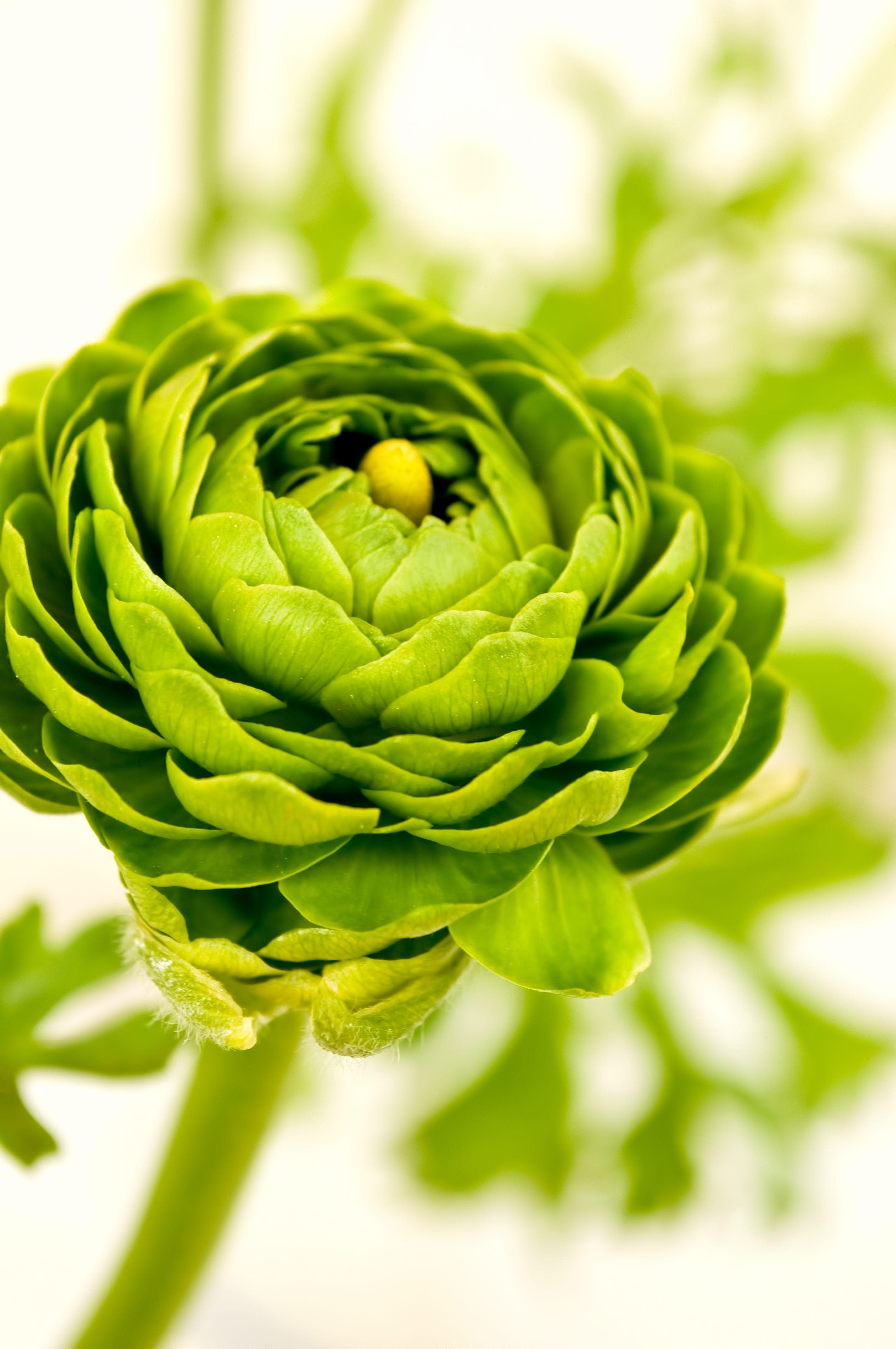 героинь новой красивые фото зеленых цветов портьеры