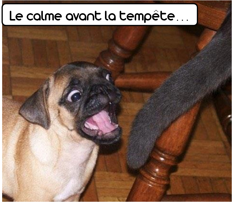 #dog #cat #fight #humor #funny #pets #photo #zoomalia #animalerie