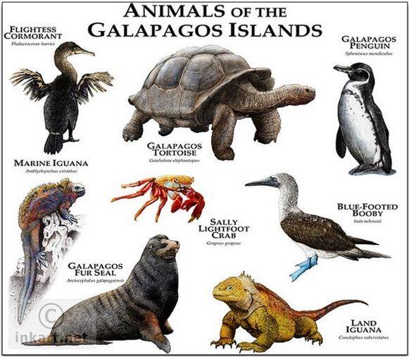 Galapagos Islands Animals Google Search Animals
