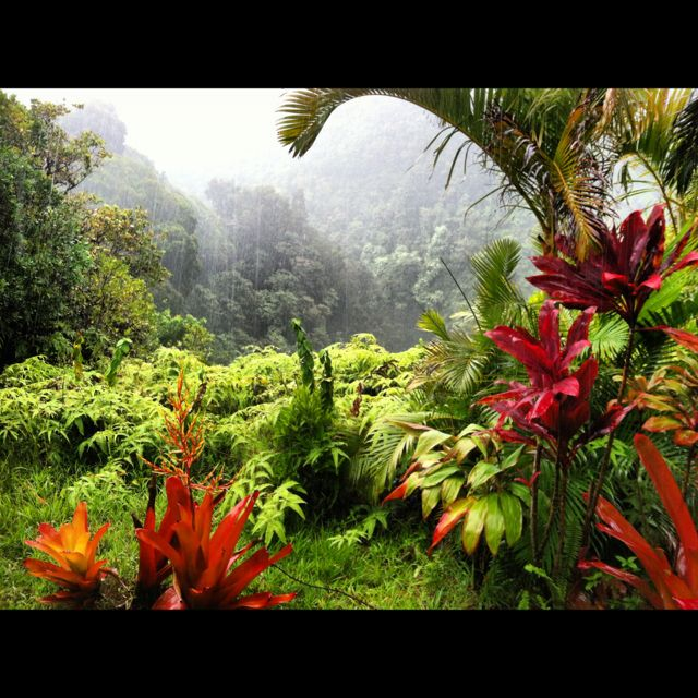 Garden of Eden, on the road to Hana, Maui | Favorite Places & Spaces ...