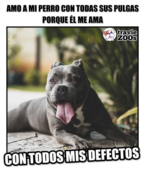 No Me Pone Pretextos Ni Me Juzga Por Mi Raza Animals Memes Cute