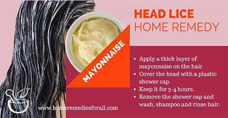 Picture Of Home Remedies For Head Lice Lice Remedies Home