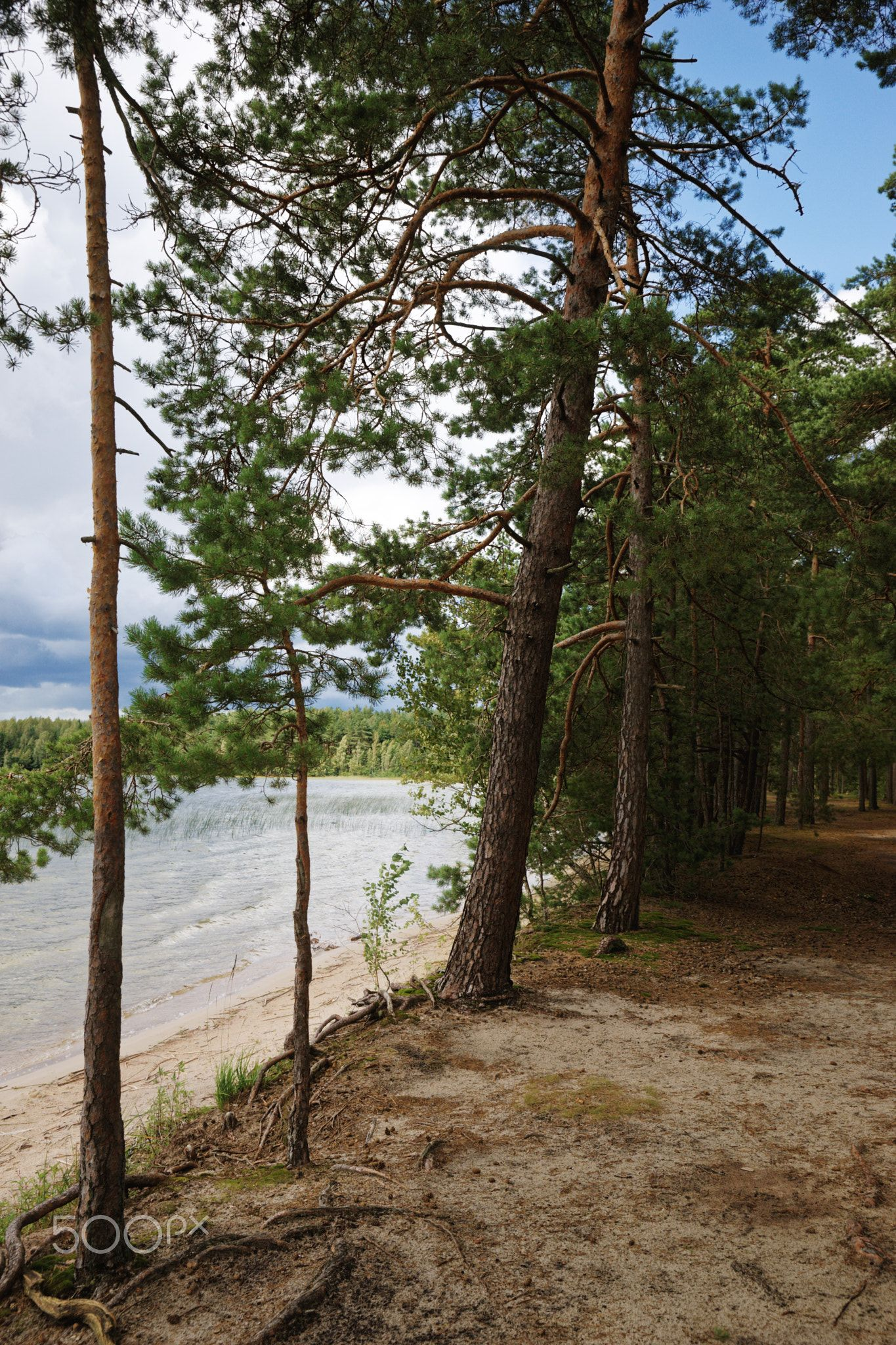 Before the storm - II. - The deserted shore of the lake next to the mixed forest.