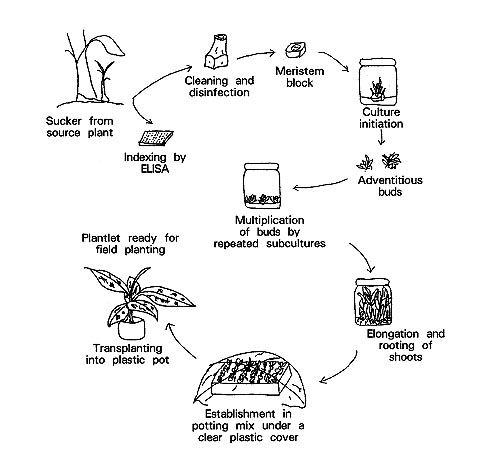 diagram of orchids