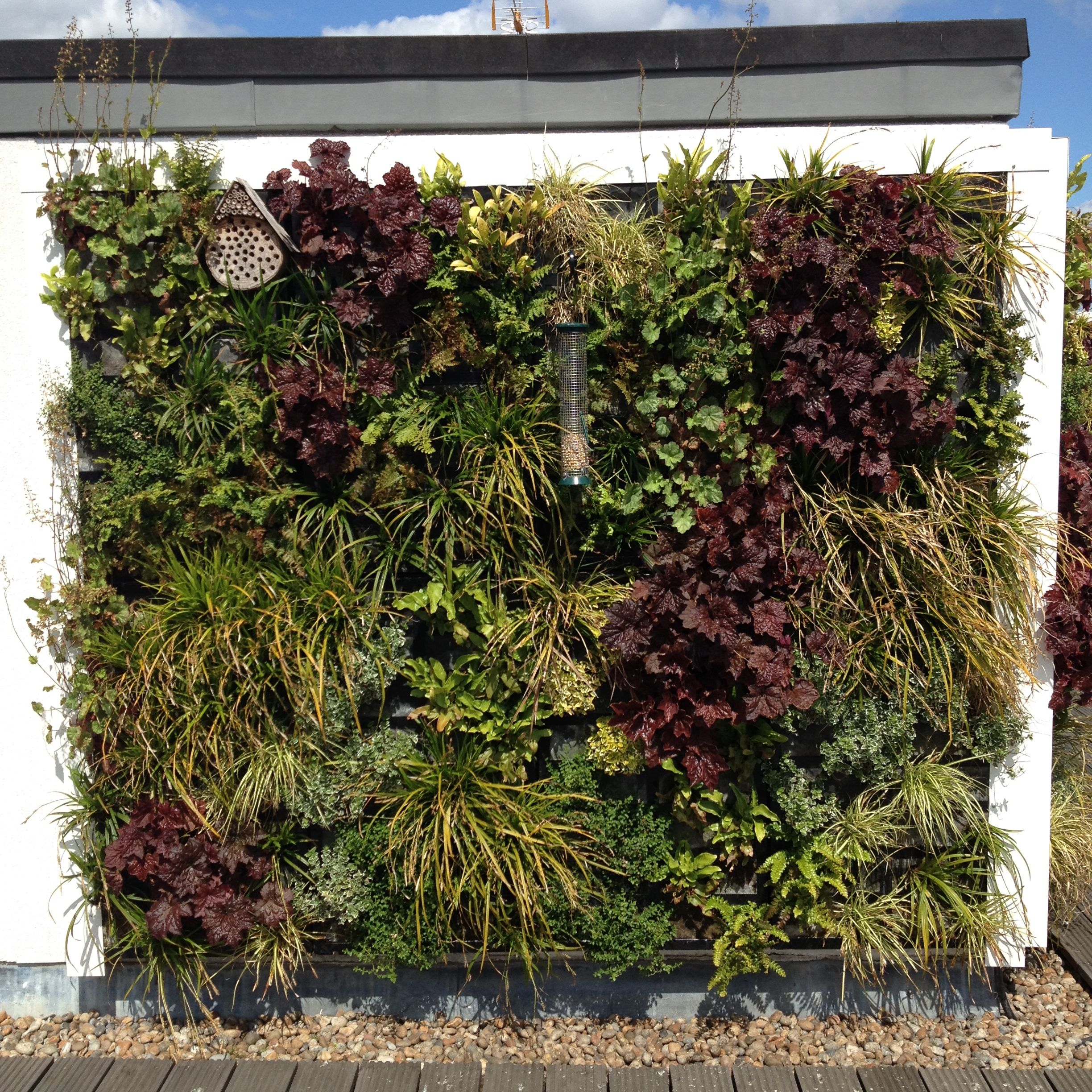 A #birdfriendly #greenwall in the heart of the #westend ...