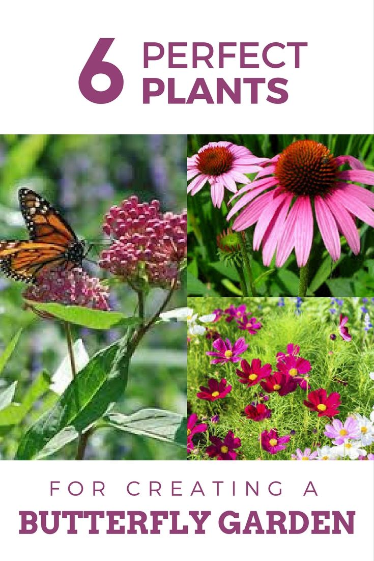 6 Plants Perfect For Creating A Butterfly Garden | Bright colours ...