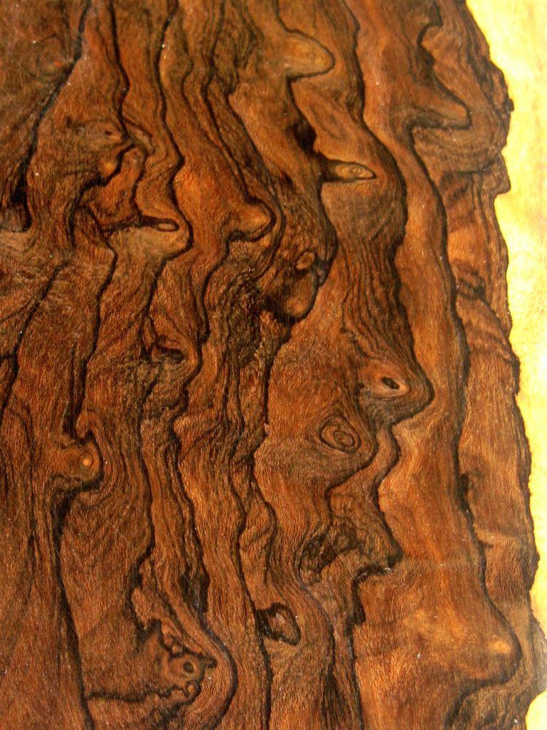 Ziricote Burled Wood