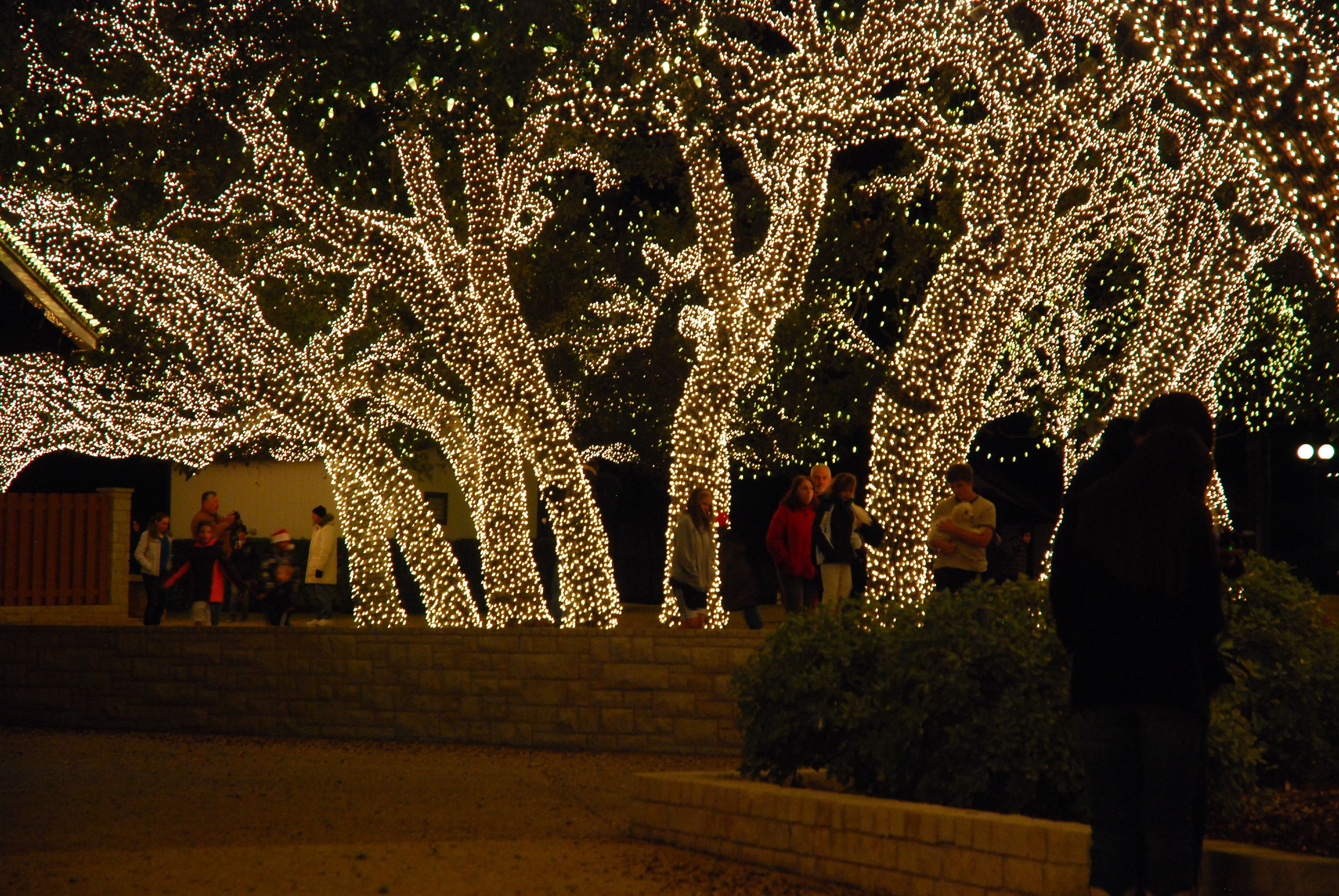 Light Display In Johnson City Texas At The Electric Company Christmas Lights Christmas Christmas Pictures