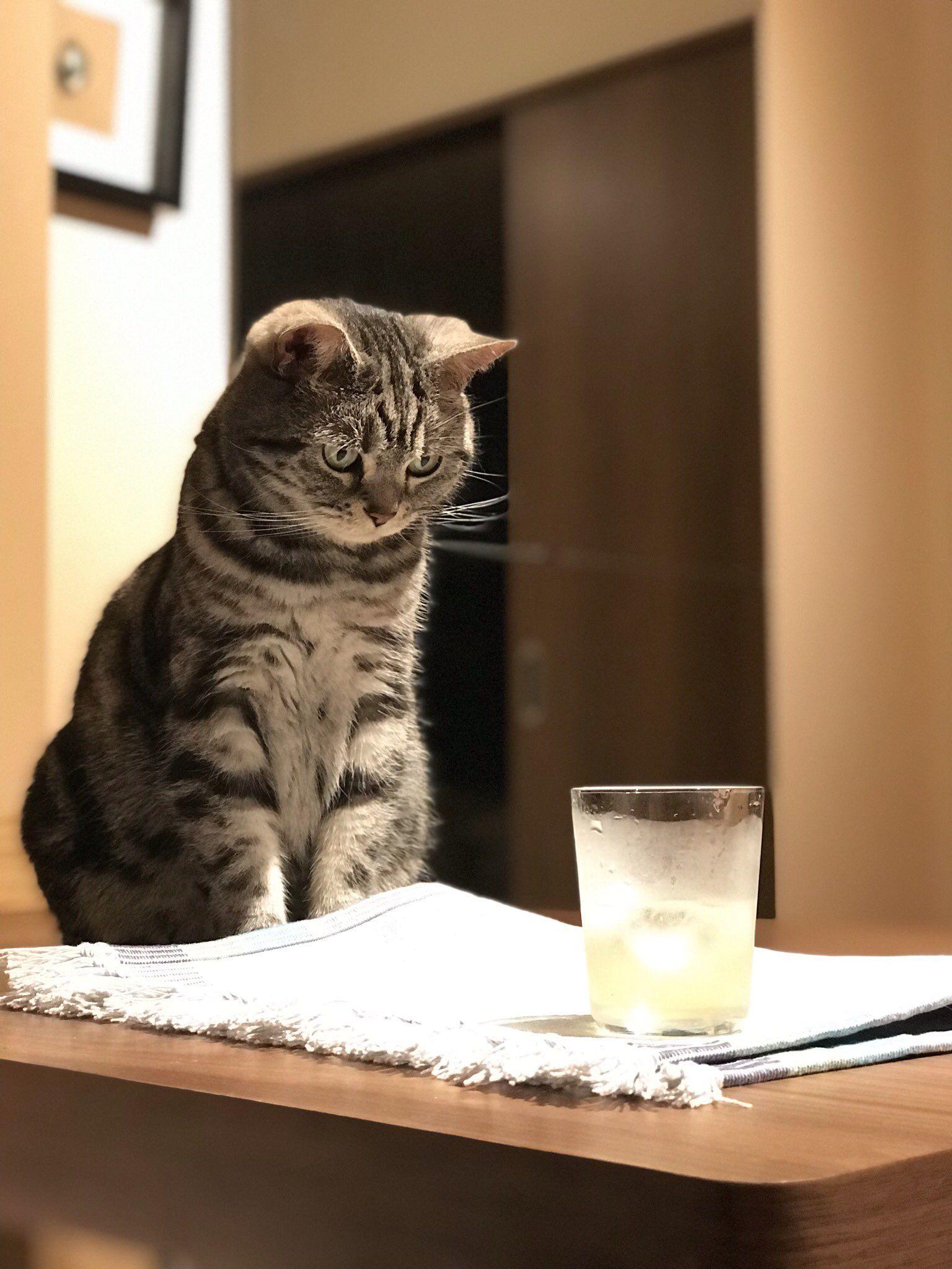 ざわこ On Twitter 猫 動物 子猫