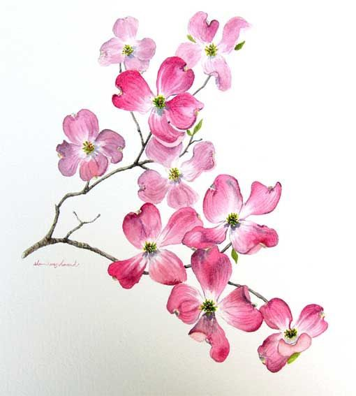 Dogwood Blossom pink tatoo | Dogwood Flower Tattoo I want! Means Unconditional Love