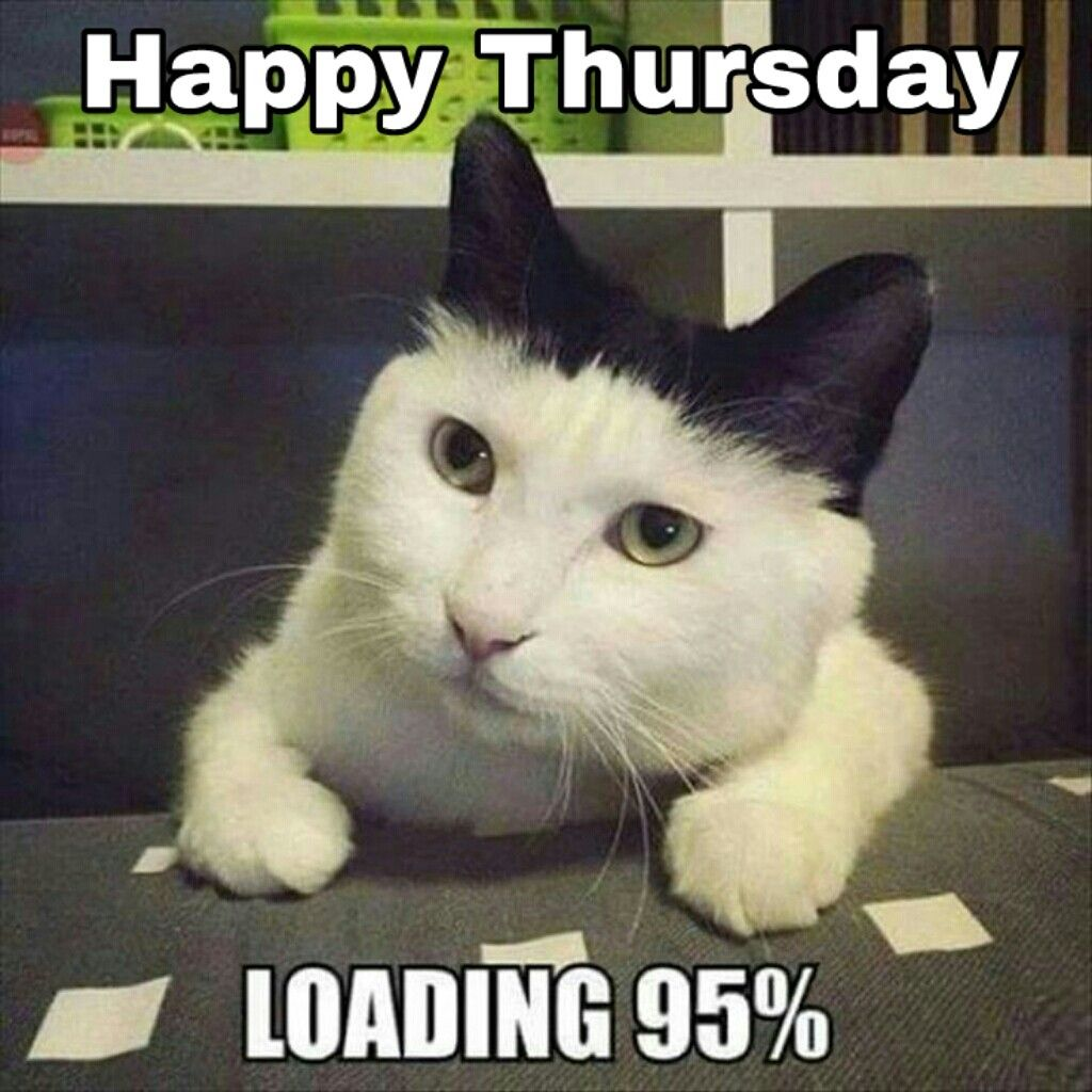 Happy Thursday Funny Cat Memes Funny Animal Pictures Funny Animals