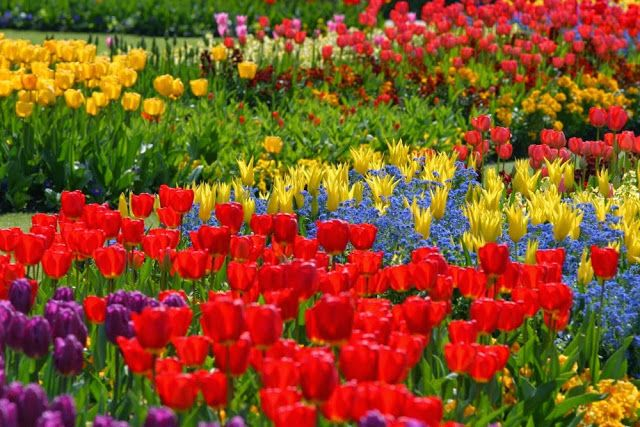 JARDIN+CON+FLORES+COLORIDAS+%286%29.jpg (640×427) | Flowers and ...