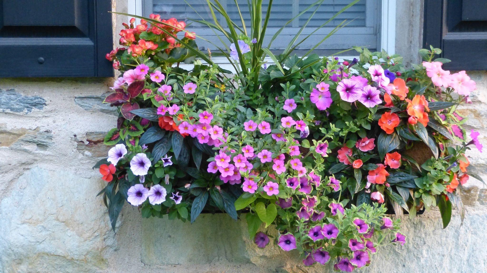 Pin On Home Garden Ideas