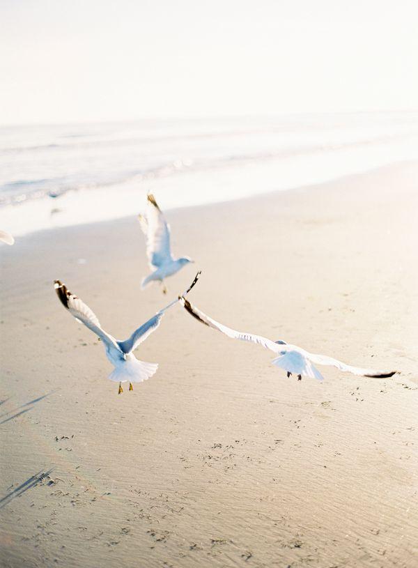 Poseidon Wedding - sea gulls at the beach | photography . Fotografie . photographie | Photo: Jose Villa @ oncewed |