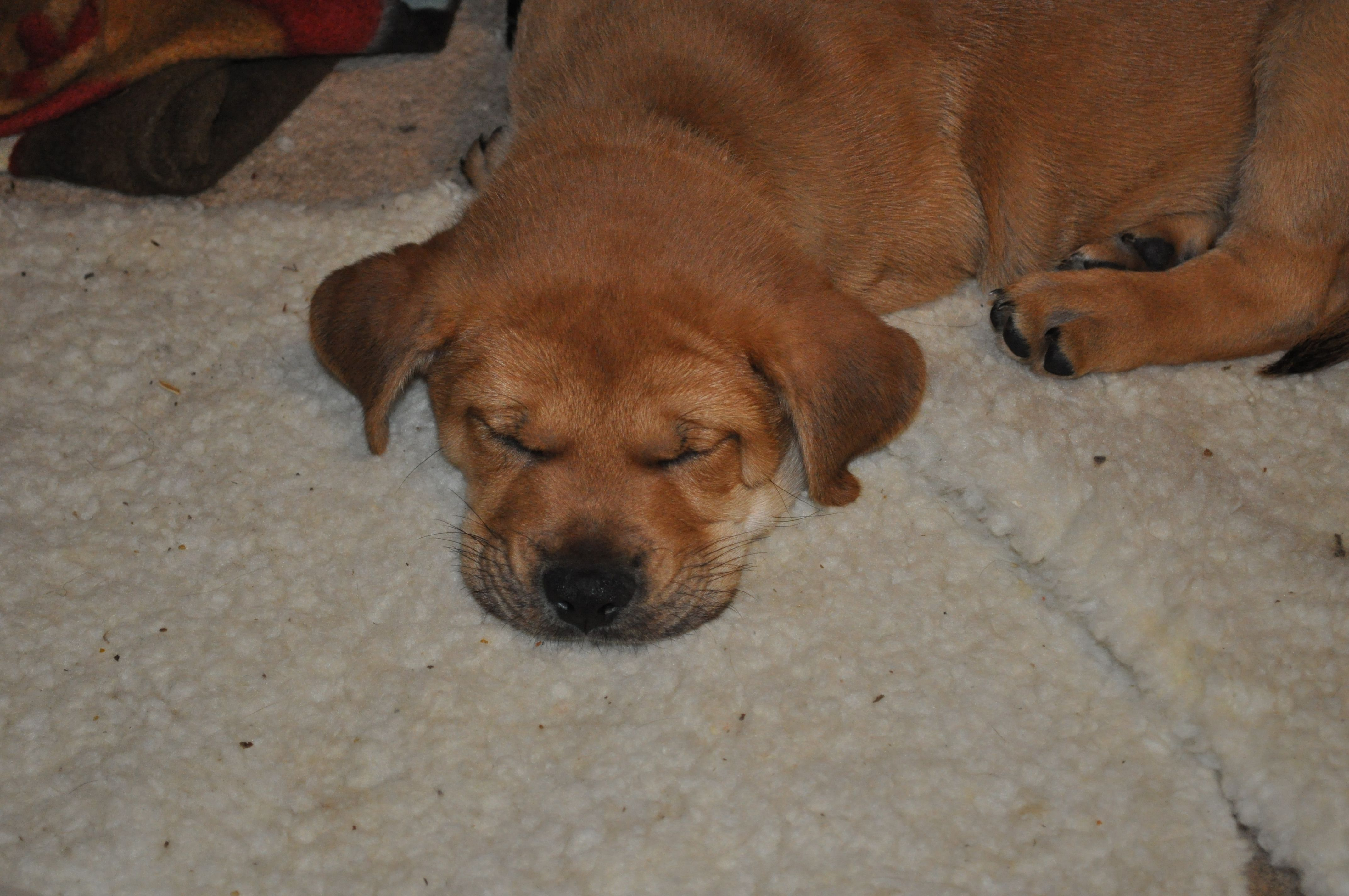 Puppies for adoption in northwest indiana