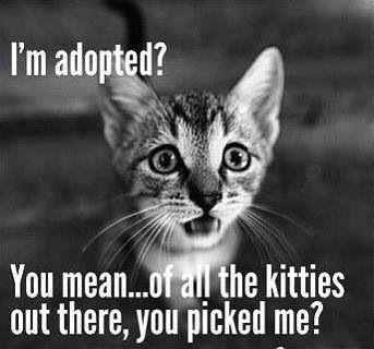 Pin By Karen Davenport On Cute Kitty Cute Cats Photos Cute Animals Crazy Cats