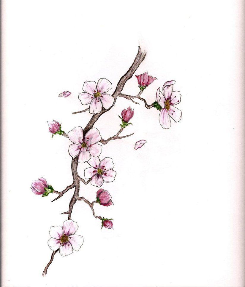 404 Not Found Blossom Tattoo Cherry Blossom Tattoo Cherry Blossom Tattoo Meaning