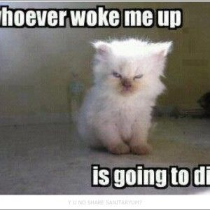 clean funny pictures funny cards pinterest clean