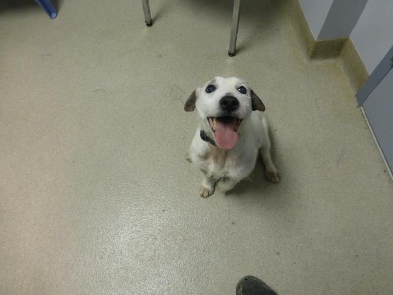Adopt Mr Magoo 125 On Dog Control Dogs Up For Adoption Terrier