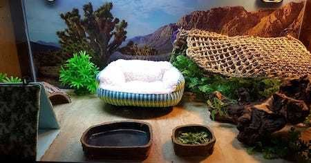 10 Inspiring Bearded Dragon Cage Setup and Decor Ideas