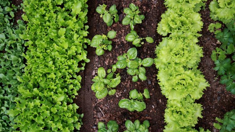Indeling vruchtwisseling u de tuin op tafel tuinieren met