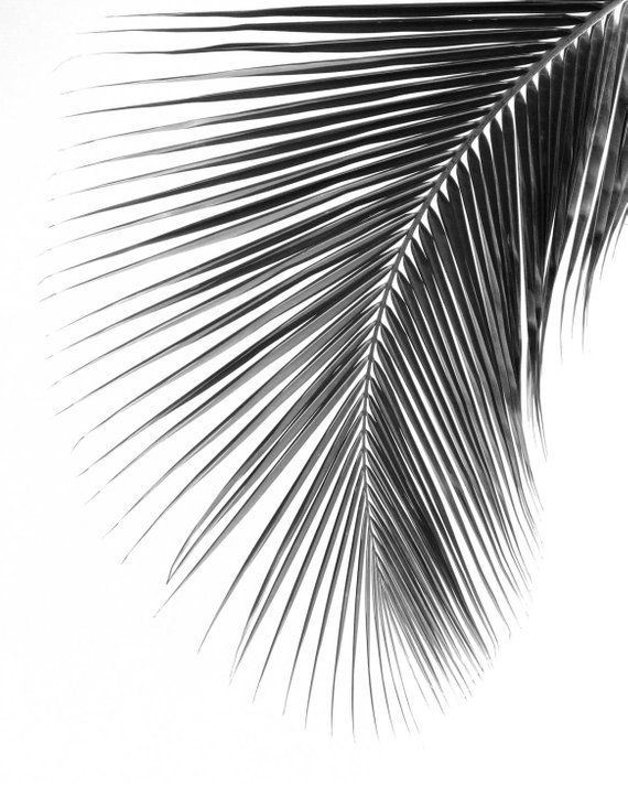 Palm Leaf Print, Black And White Photography, Abstract Tropical Leaf, Summer Art, Tropical Palm Leaves, 8 x 10 inches, Unframed