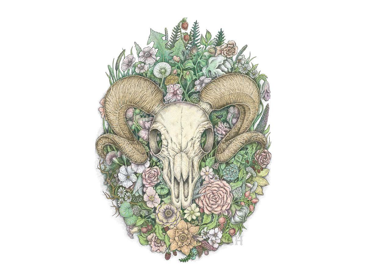 Ram Skull (Life's Mystery Series) Remastered   Eugenia Hauss