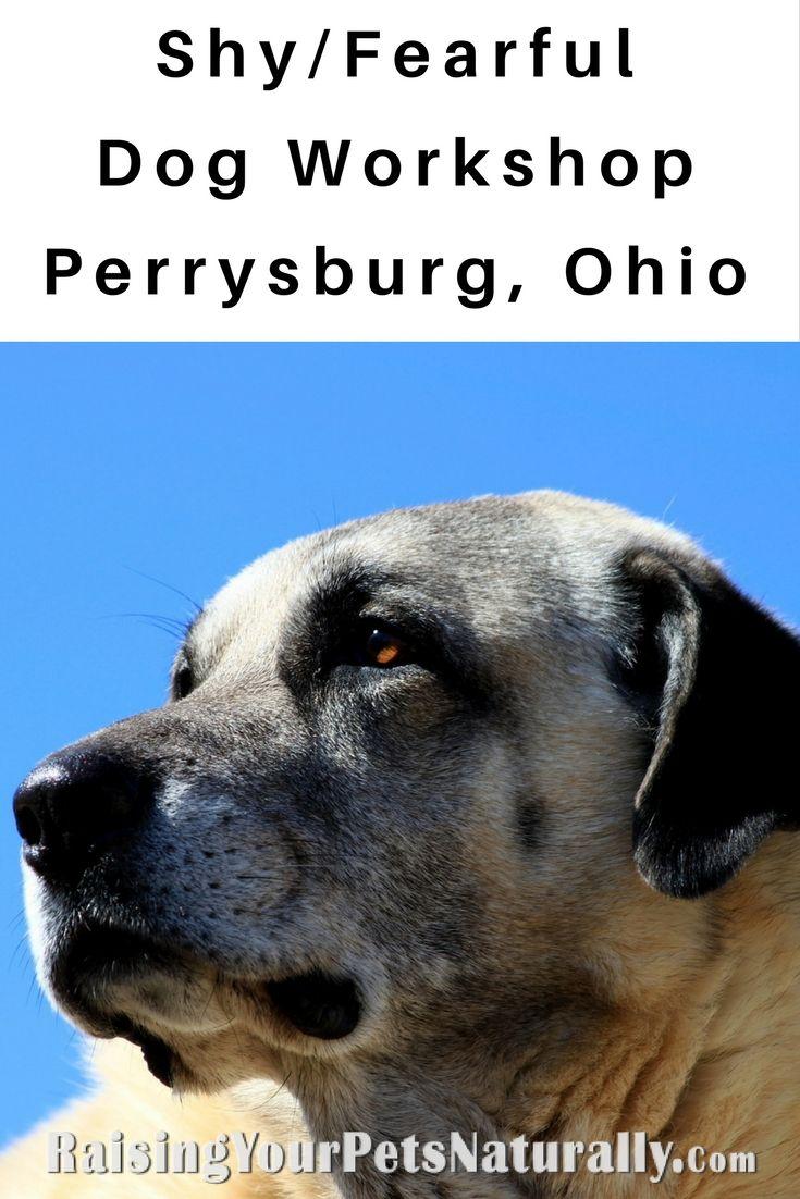 Fearful Dogs Workshop Perrysburg Ohio Toledo Metro Teach Dog