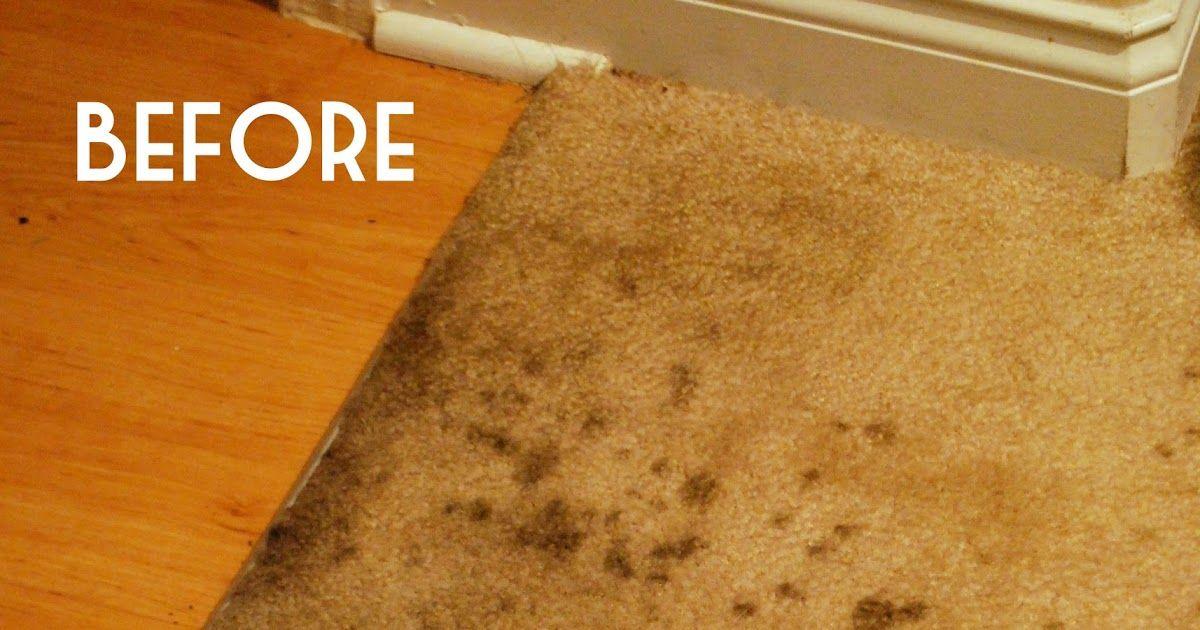 Limpiador de alfombras casero con detergente y vinagre - Limpieza casera de alfombras ...