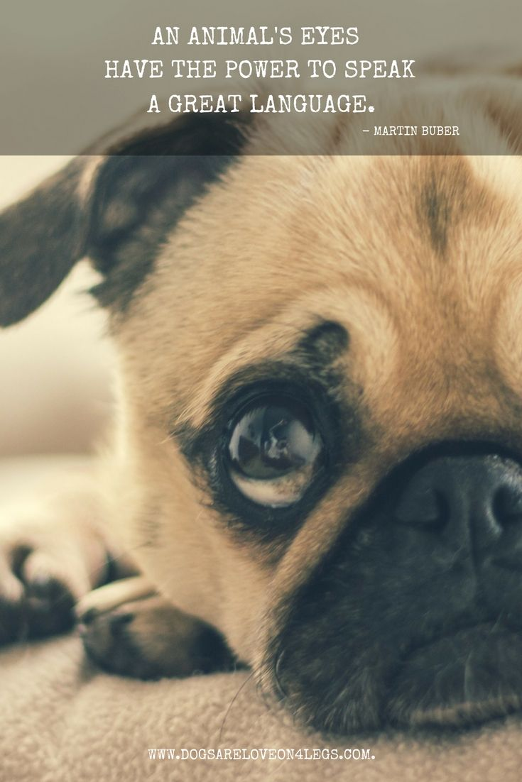 Dog Quote An animals eyes have the power to speak a