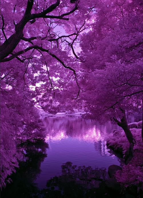 840622603 (17) Tumblr Mãe Natureza, Imagens De Paisagens, Belas Imagens, Coisas Roxas