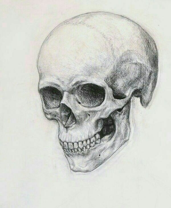 Pin De Malena Irasuegui En Guggenheim Dibujo De Calavera Esqueleto Dibujo Arte De La Esqueletica