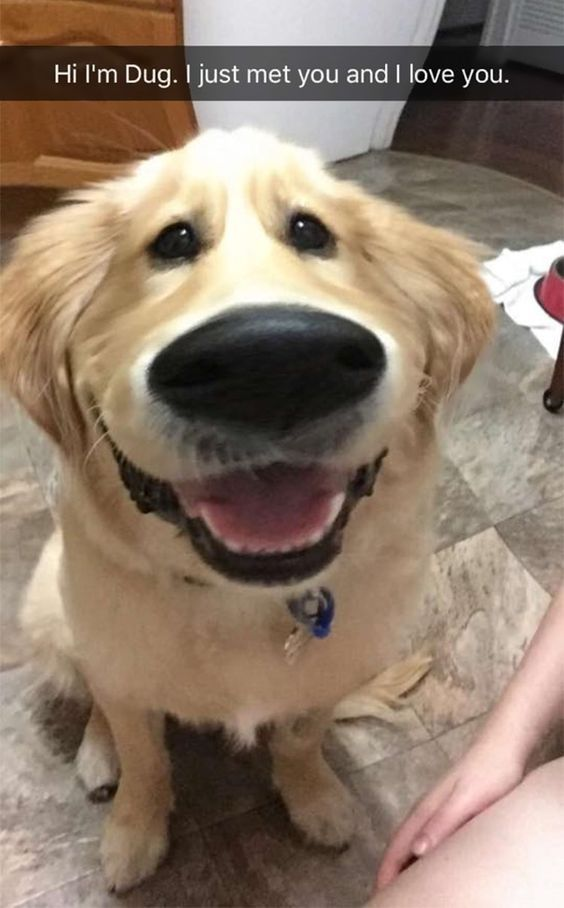 Doggosaurus Rex Yellow Lab Doggies Pinterest Labs Dog - 21 hilarious snapchats that made our day instantly better 6 cracked me up