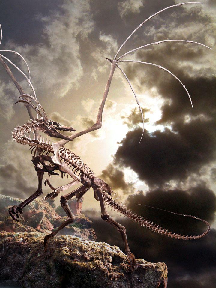 Скелет дракона картинки