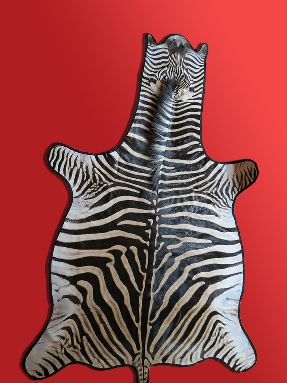 Zebra Skin Rug Authentic And Real Hide Supplier At Affordable Rates