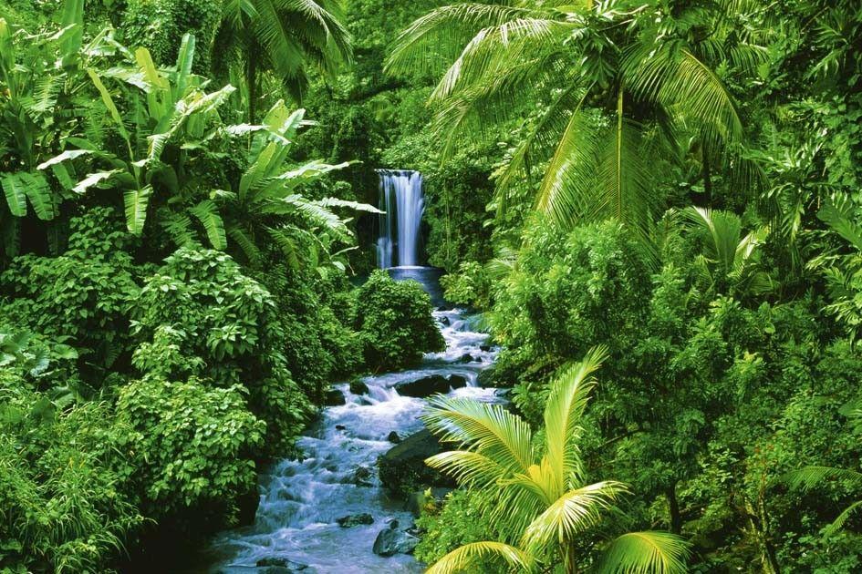 Tropisch Regenwoud Google Zoeken Poster Prints Forest