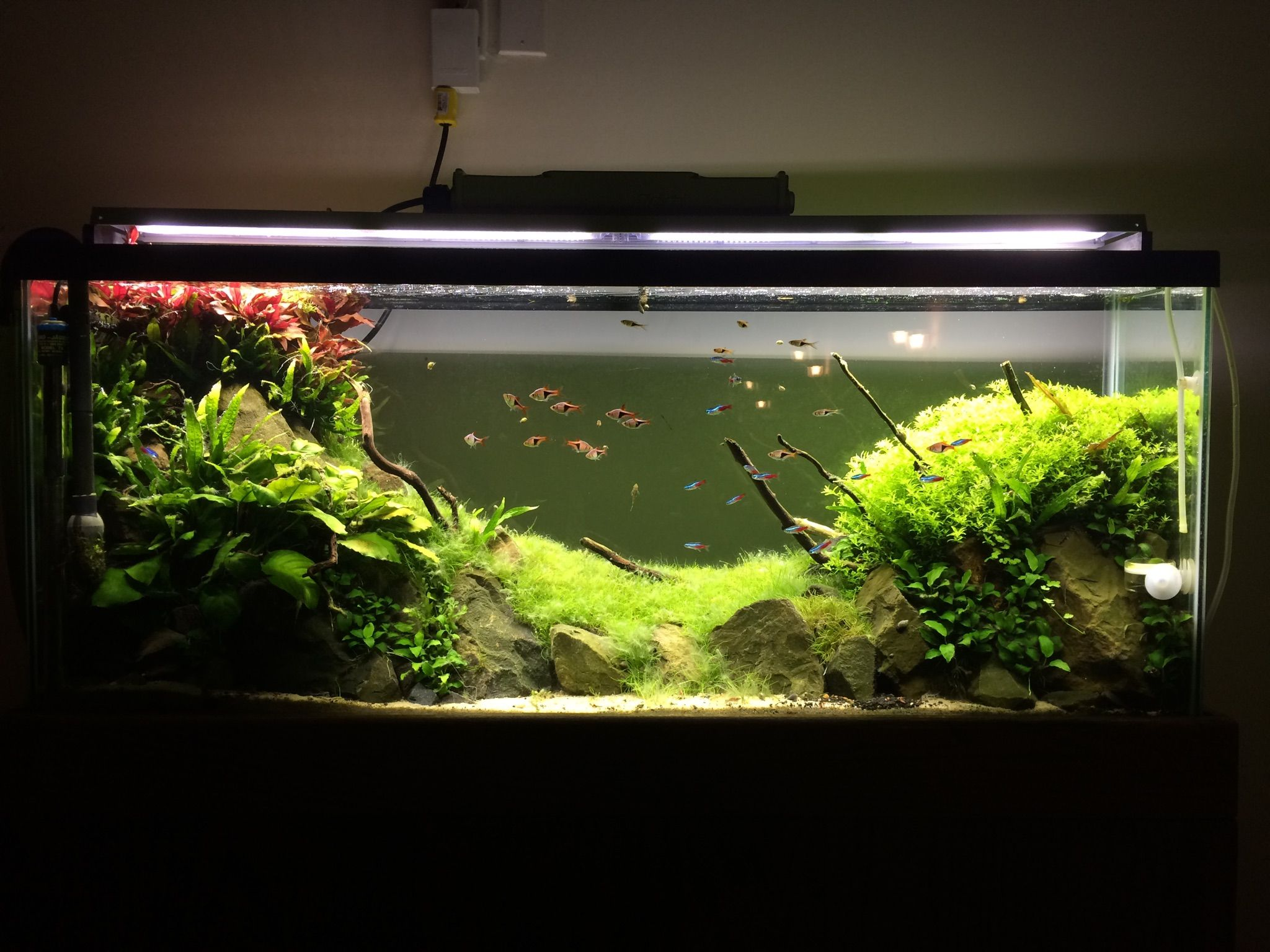 Planted Tank / Aquascape