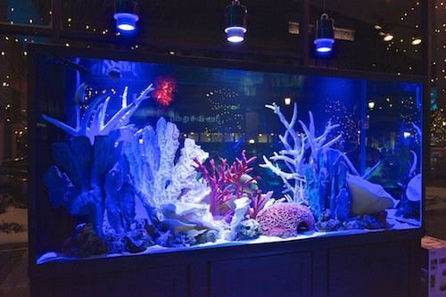 I Will Have A Salt Water Tank In The Office Tank Pinterest