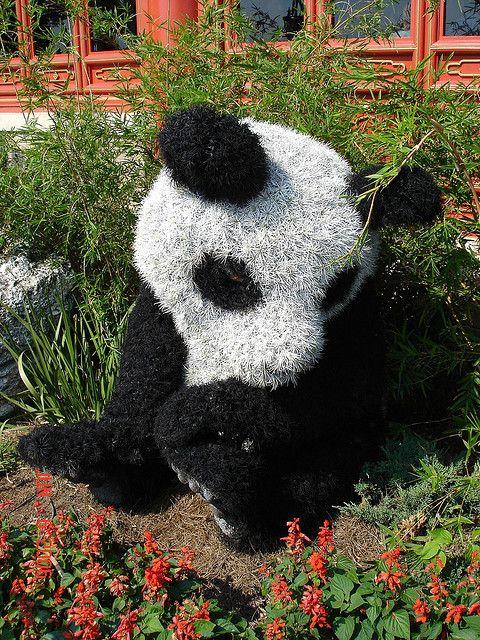 Panda Topiary - China   Flickr - Photo Sharing!