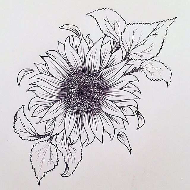 Photo of Sunflower tattoo. Really liking this.