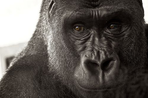 Image detail for -primate house philadelphia zoo